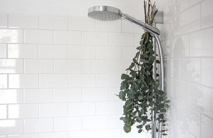 eucalipto en la ducha