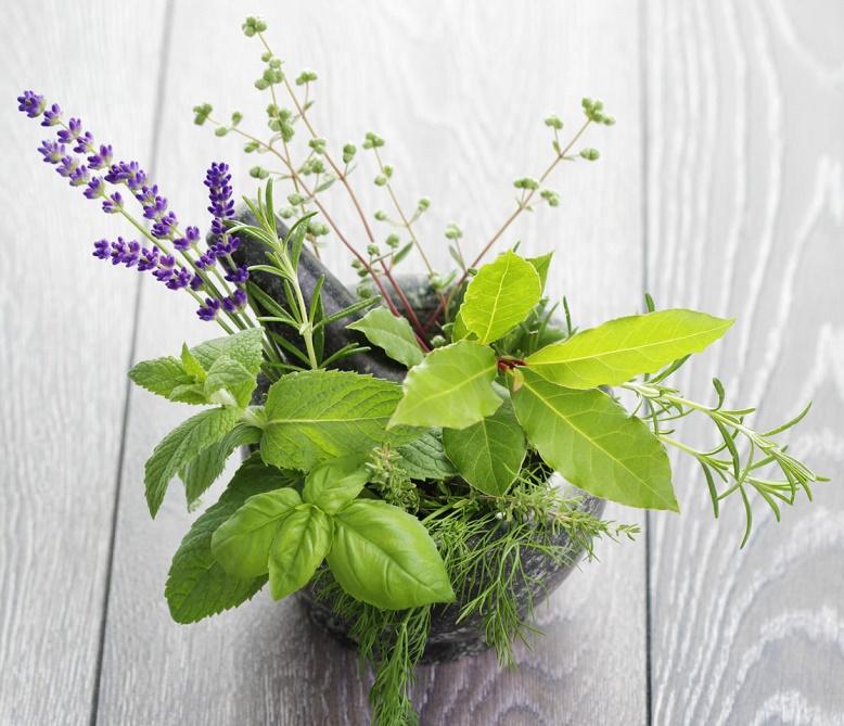 5 hierbas repelentes de moscas - Moscas pequenas cocina ...