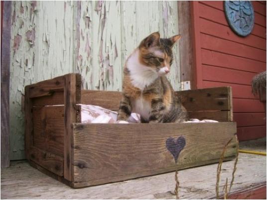 Una cama para gatos usando cajón para frutas reciclado