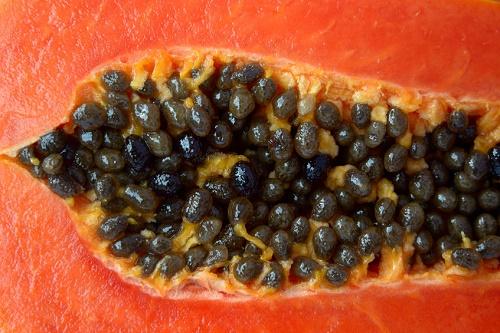Papaya semillas