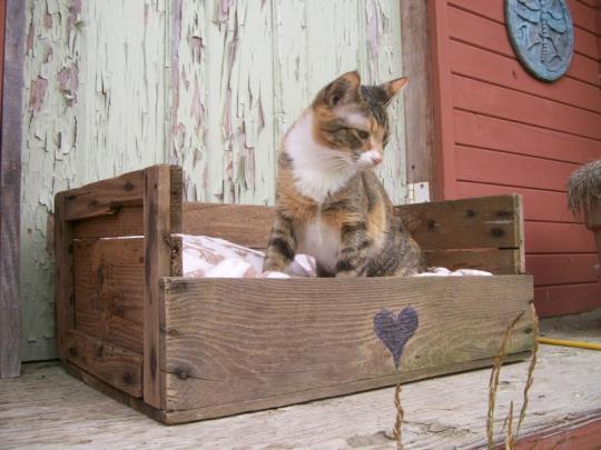 camas para mascotas madera