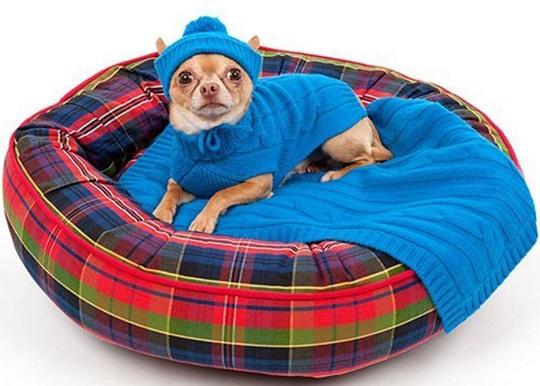 cama para mascotas colchón