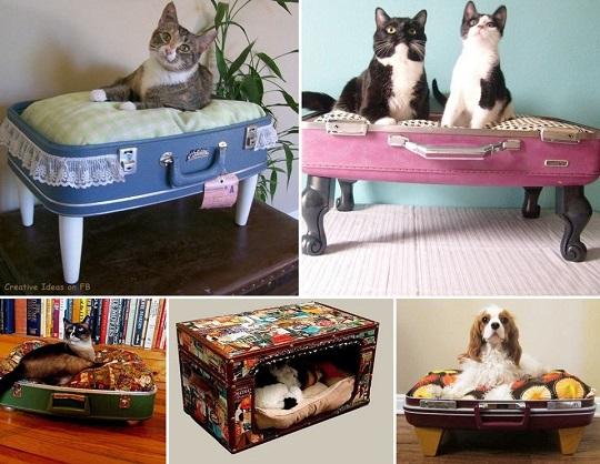 camas para mascotas maletas