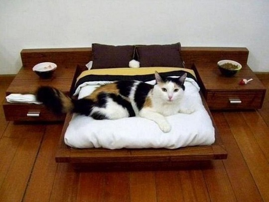 camas para mascotas camita elegante