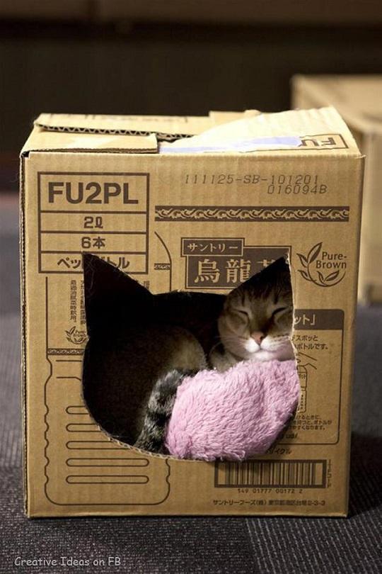 cama para mascotas cajita