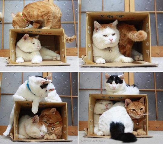 camas para mascotas cajitas de carton