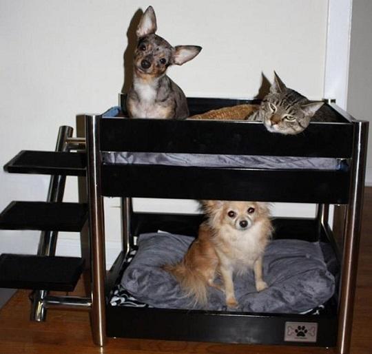 33 ideas de guaridas y camas para consentir a tus mascotas. Black Bedroom Furniture Sets. Home Design Ideas