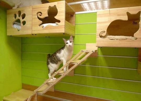 camas para mascotas cubos