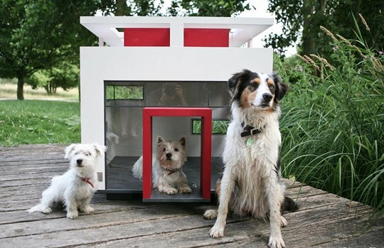 camas para mascotas modernista