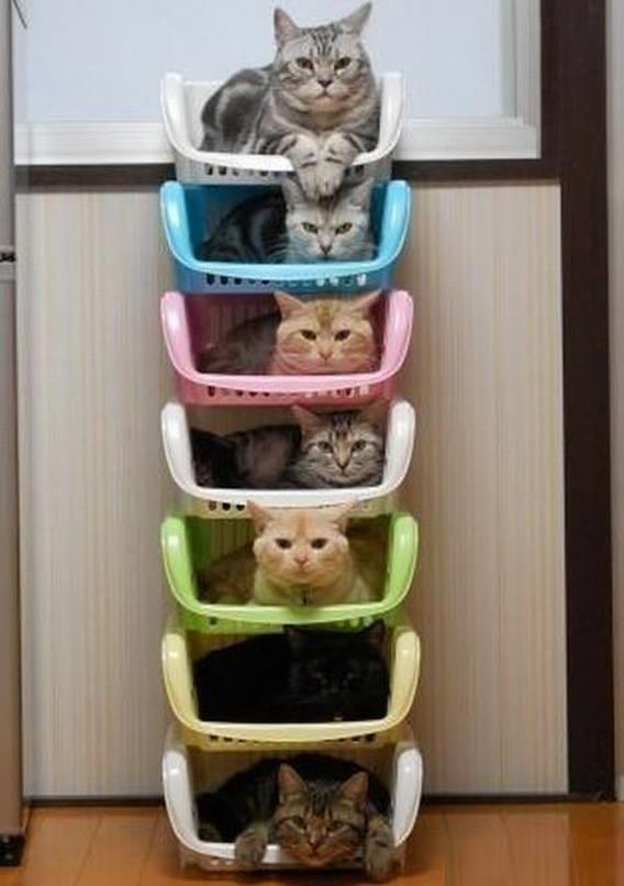 cama para mascotas canastas