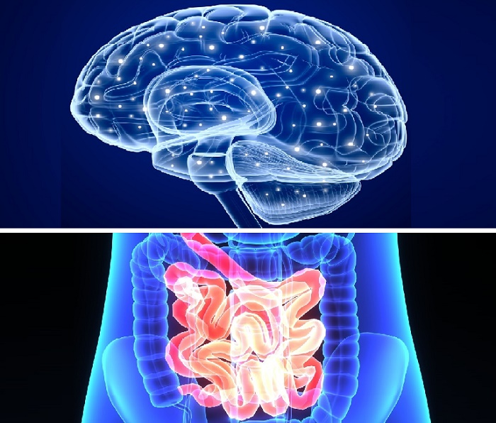 probióticos cerebro intestinos