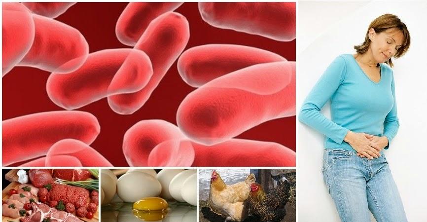 salmonella E. coli