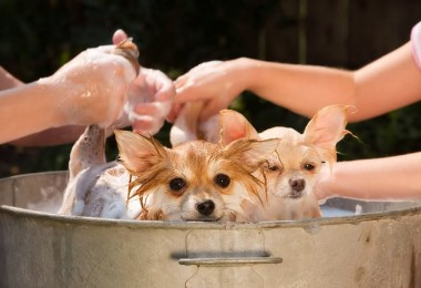 petsofresh_Dog_Wash_packages