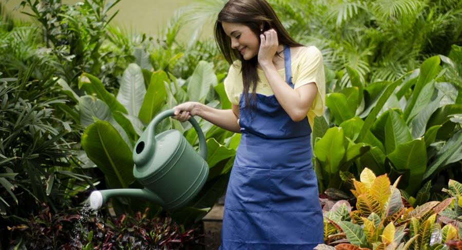 Cómo regar las plantas de manera adecuada