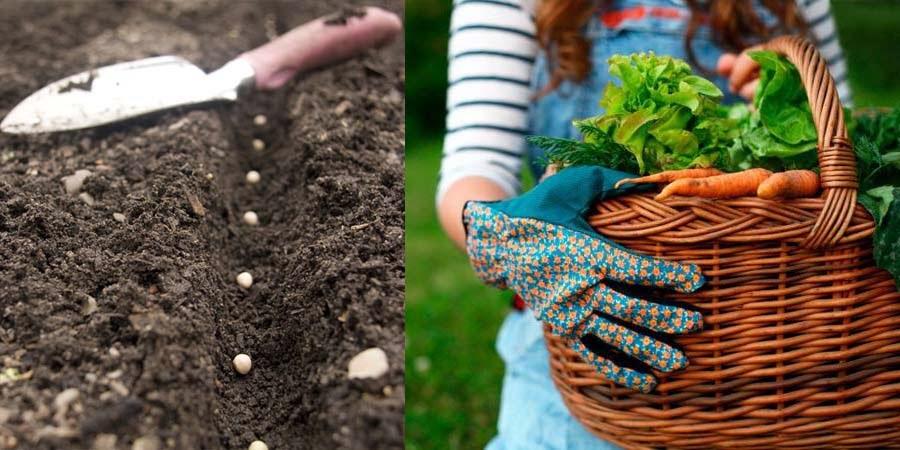 cultivar en suelos pobres