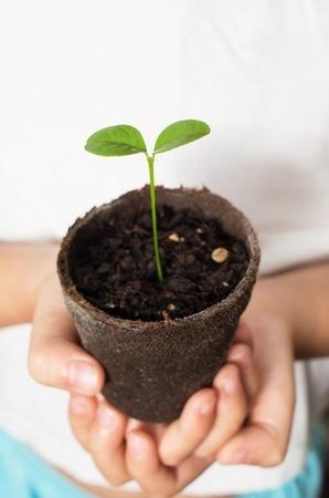 Crecer un árbol de limón Plántula de limón