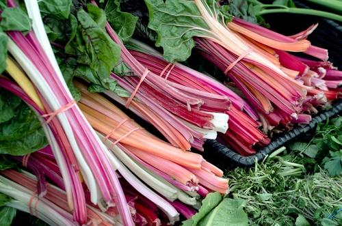 Ruibarbo vegetales perennes