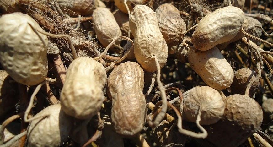 vegetales perennes