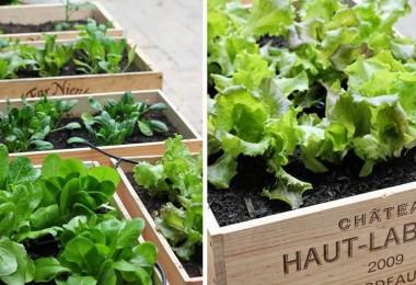 vegetales-volver-a-crecer