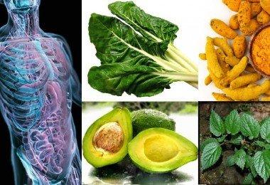 6-Tejidos-que-pueden-ser-regenerados-a-trav-C3-A9s-de-la-nutrici-C3-B3n