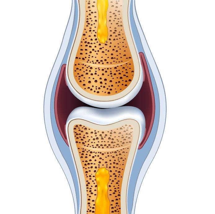 la regeneración de los tejidos