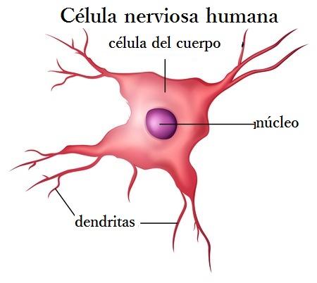 regeneración de las células
