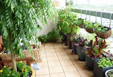 Cultivos-ideales-para-una-huerta-urbana