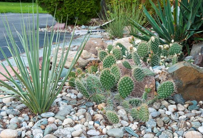 Jardín con piedras cactus