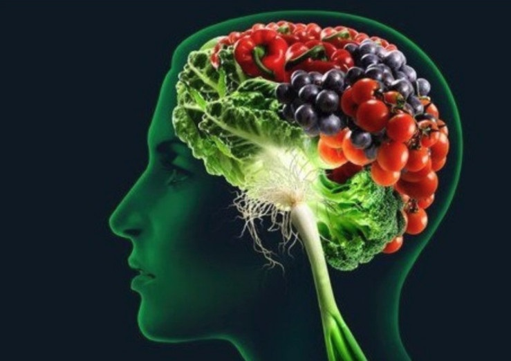 cerebro activo