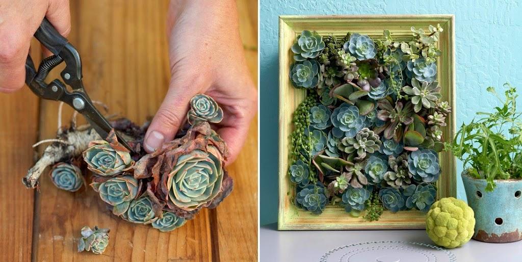 Crea tu propio cuadro vivo con plantas suculentas for Donde venden cactus
