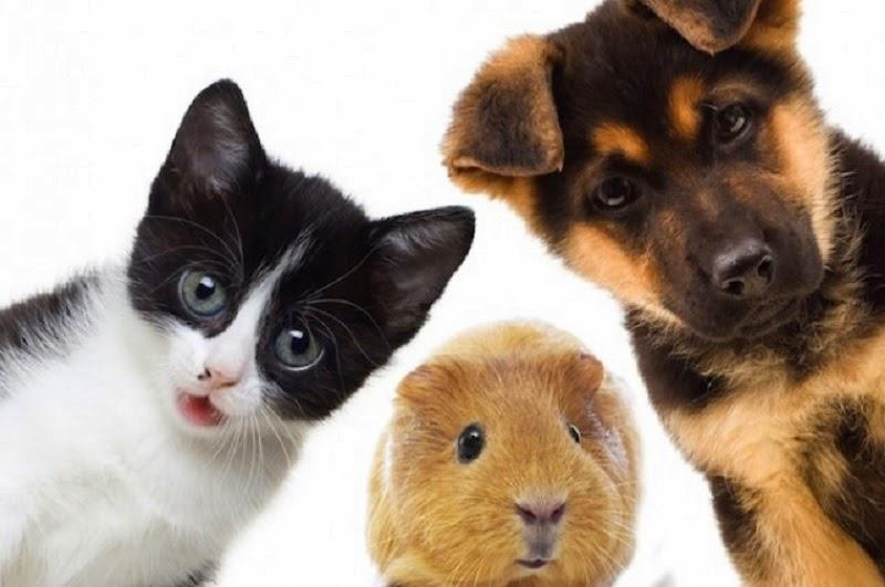 exposición a mascotas evita alrgias