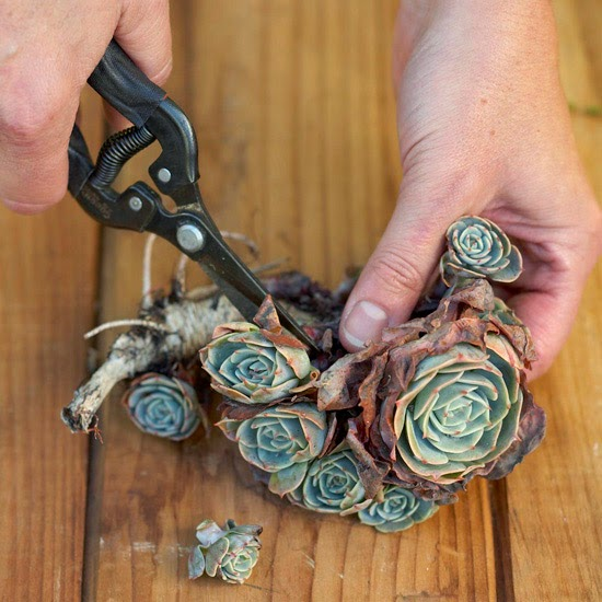 Crea tu propio cuadro vivo con plantas suculentas vida - Listones para marcos de cuadros ...