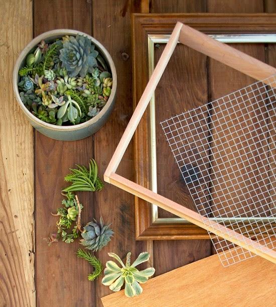 Crea tu propio cuadro vivo con plantas suculentas vida for Listones de madera para palets