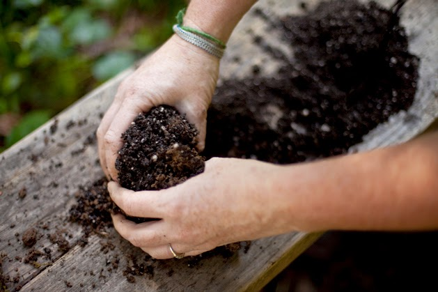 un jardín de Kokedamas  plantas en bolas de musgo  Vida Lúcida