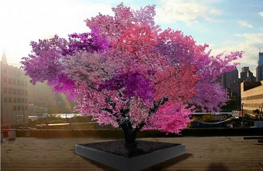 árbol que da frutos diferentes
