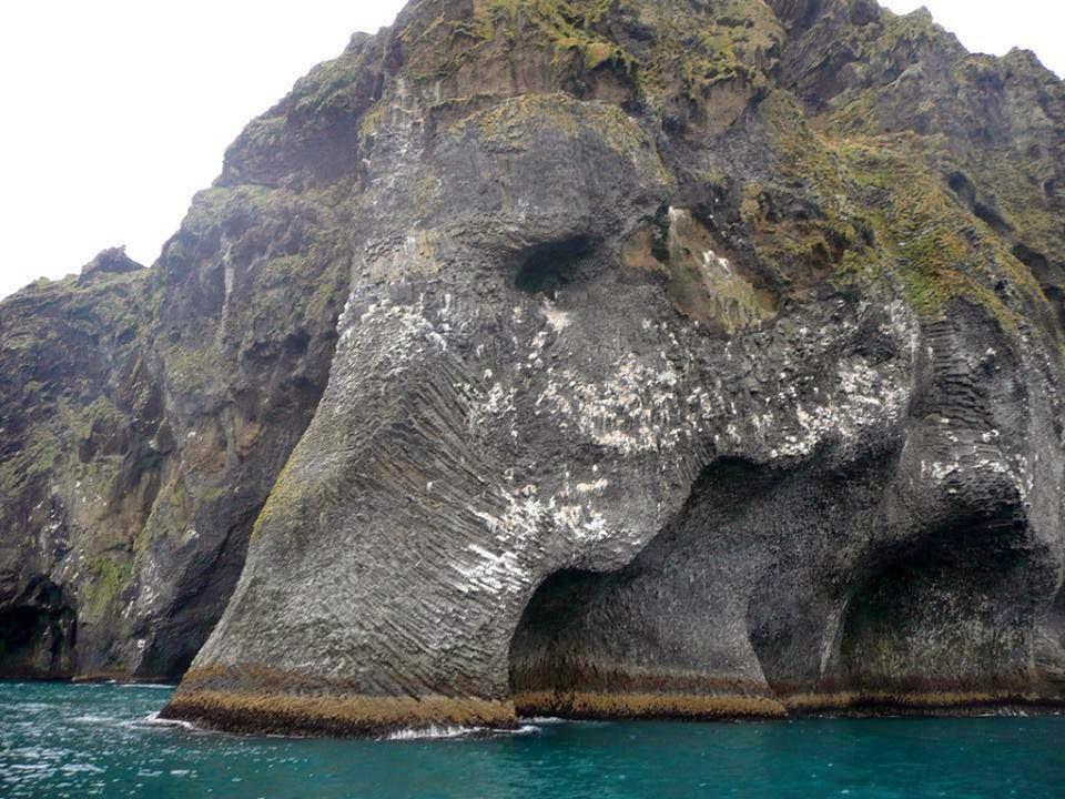 Elefante en la isla de Heimaey en Islandia