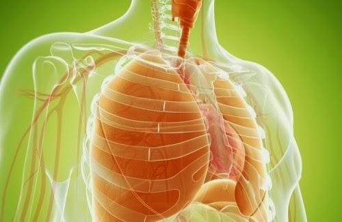 Maneras naturales de limpiar y fortalecer tus pulmones