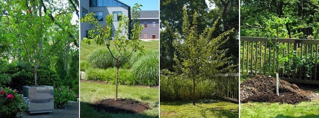 diversos tipos de ramas