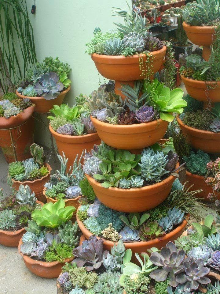 20 ideas para decorar un lindo jard n con suculentas for Ver jardines decorados