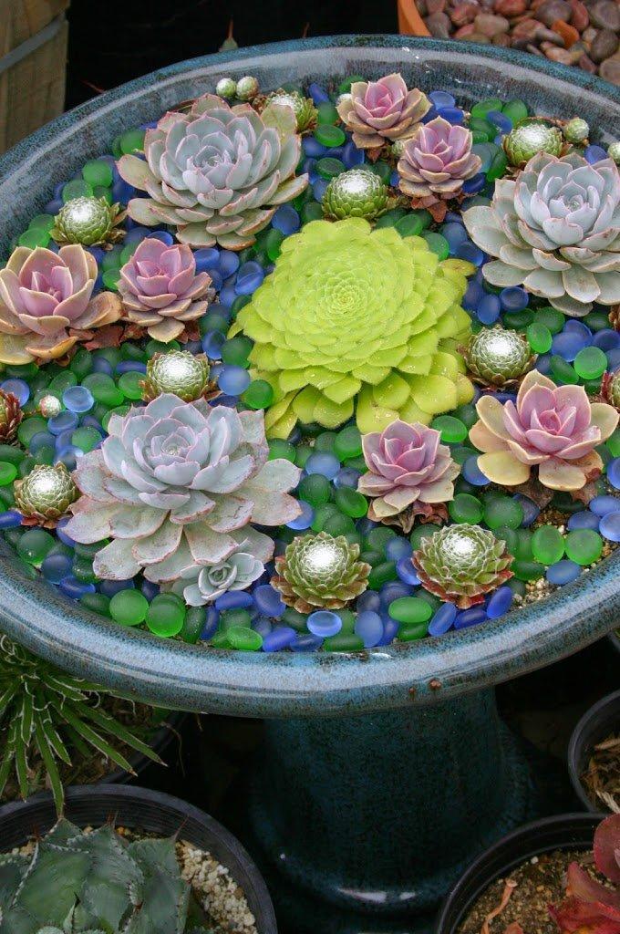 jardín con plantas coloridas