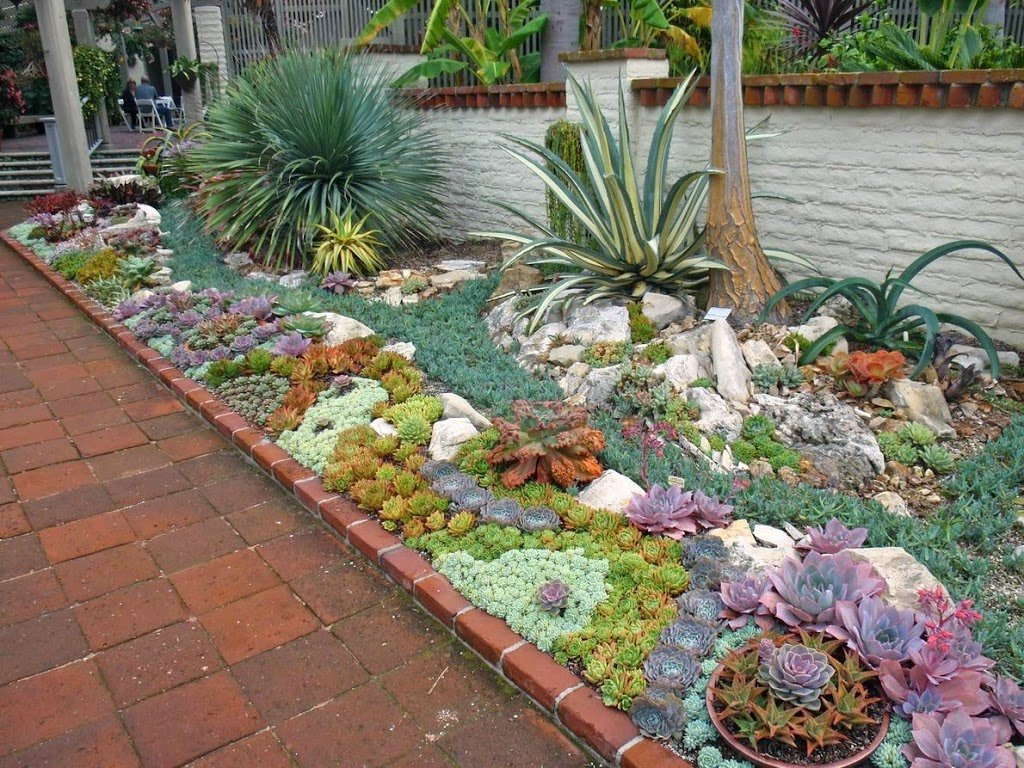 jardín suculentosas en patio