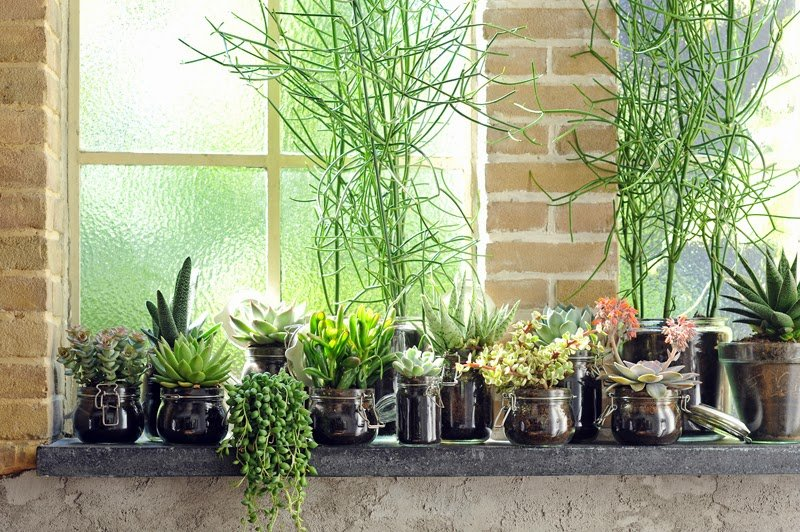 macetitas plantas