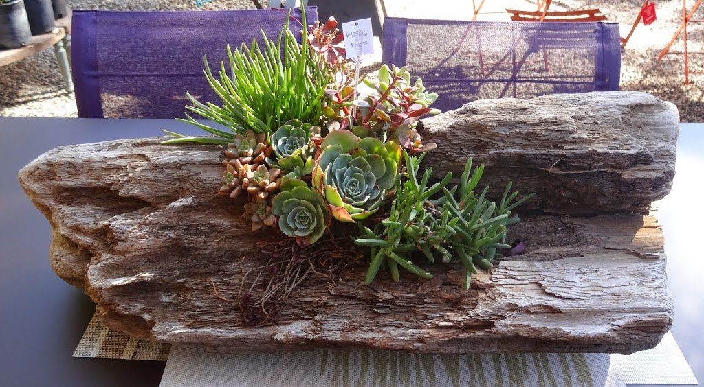 20 ideas para decorar un lindo jard n con suculentas for Arboles decorativos jardin