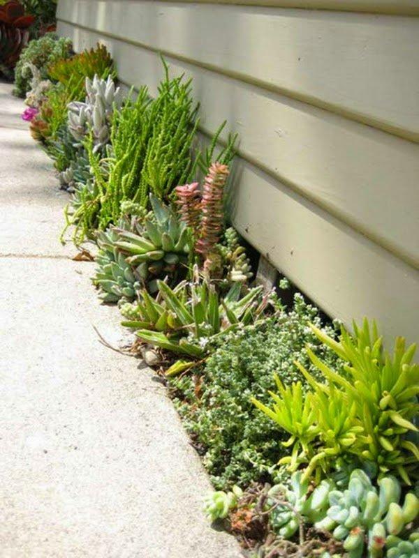 jardín perimetral con suculentas