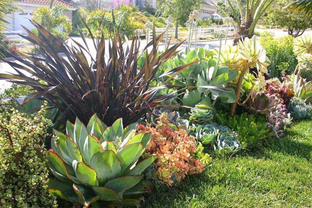 20 ideas para decorar un lindo jard n con suculentas for Jardines con cactus