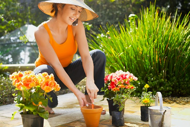 Cuidado de plagas en las plantas decorativas