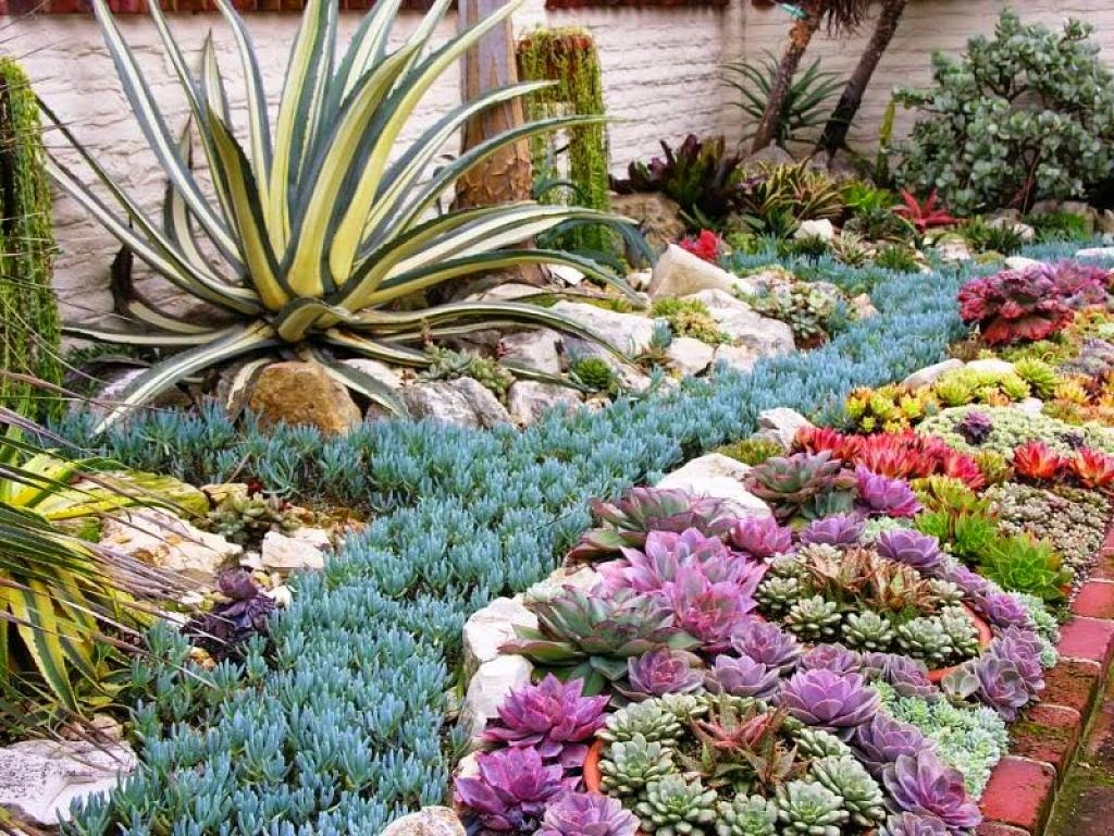 jardín grande suculentosas