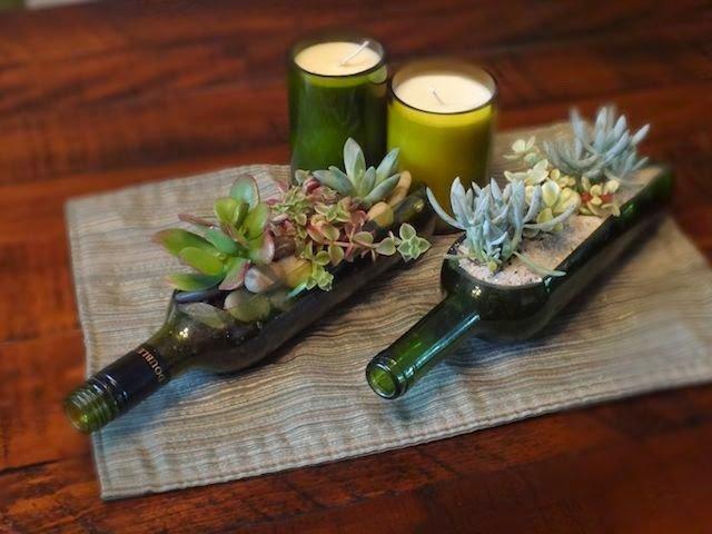 plantas suculentosas
