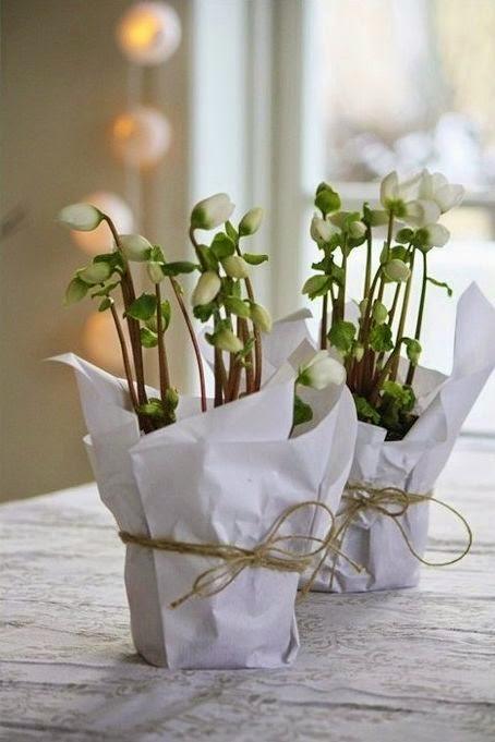 decorar regalos plantitas