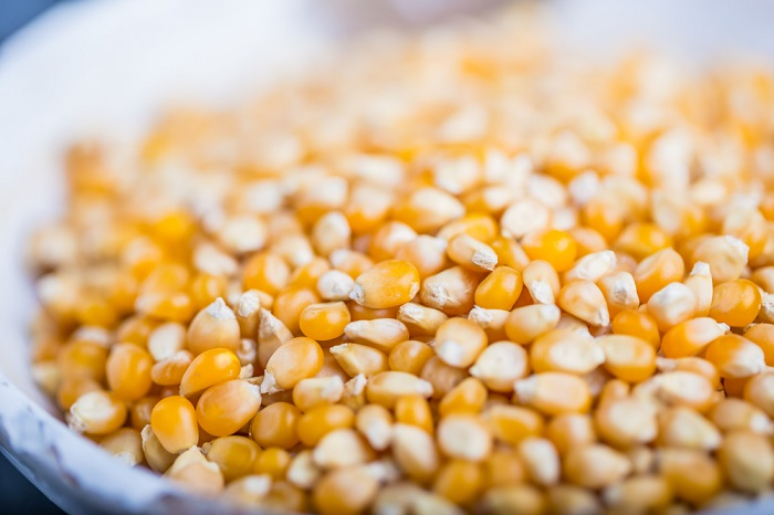 maíz sin gluten